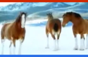 Watch this classic Christmas Clydesdale Budweiser advertisement that will never be shown in TV again