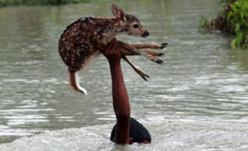 EPIC SAVE: See How This Boy Reacted When He Saw A Drowning Baby Deer