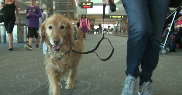 Woman Lets Her Dog POOP in Airport, Annoyed Passenger Gets GLORIOUS Revenge