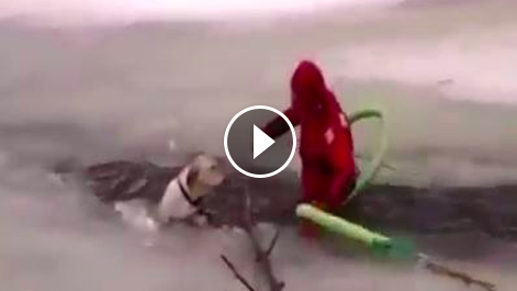 Firefighter risked it all to save frozen dog
